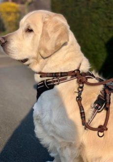 Système safety 03 entre chien et look