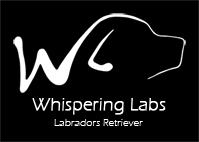 Logo Whispering labs